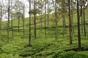 Ooty - Queen of Nilgiris