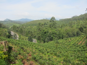 Kerala Day 2: The Intricacies of Munnar