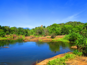 Woods in the deep south – Tirunelveli-Papanasam in Tamil Nadu