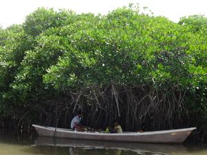 Solo Travel - Chidambaram and Pichavaram
