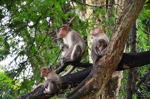 Parambikulam - for the real wildlife experience