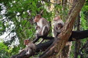 Parambikulam - for the real wildlife experience