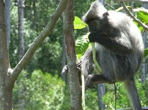 Sandakan: Borneo in a nutshell