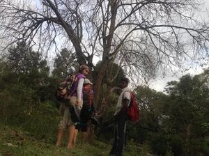 The Gift of the Forest: Kodaikanal