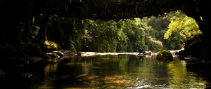 Magical Meghalaya: The living root bridge