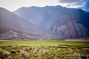 Ladakh Diaries: Pangong Tso-Canvas Of The Sky