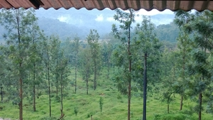 Immersed in Greenery: Wayanad, Kerela