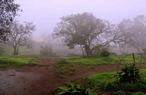 The Majestic Western Ghats!
