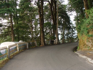 Dalhousie to Khajjiar – Pick your pine cones!