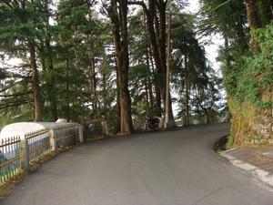Dalhousie to Khajjiar – Pick your pine cones!