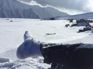 Glistening Snow Of Gulmarg