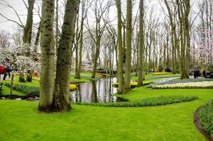 Keukenhof- The tulip paradise.