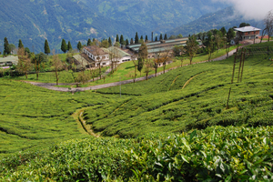 Splendid Sikkim & Darjeeling Bike Tour