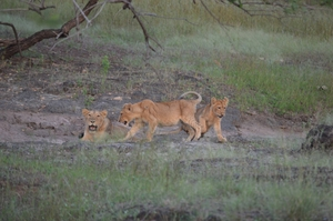 Cause the jungle makes you feel at home | Gir National Park