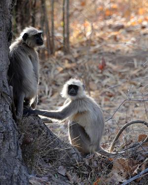 Bandhavgarh: A Wild Sanctuary