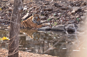 Chronicles of Ranthambore National Park