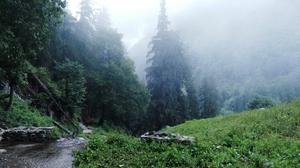 Curious Case of Brownies in Tosh, Himachal Pradesh
