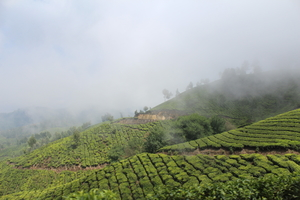 Munnar it is!!
