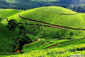 Nilgiris - A Tryst with Mother Nature