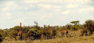 The Masai Experience