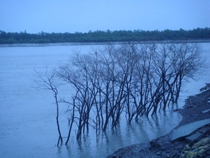Sunderbans : The Mangroves of India