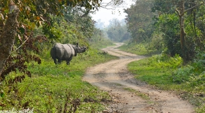 A little gem called Kaziranga!