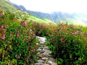 Valley of flowers and Deoriatal trek