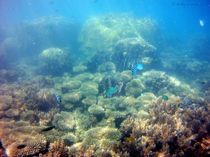 Snorkel at Perhentian Islands, A tropical Paradise in Malaysia