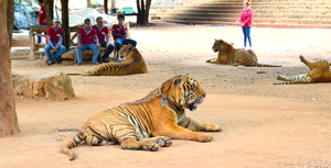 Weekend in Kanchanaburi, Sanctuary for wild animals