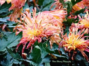48 Hours in Kaifeng ~ City of Chrysanthemums