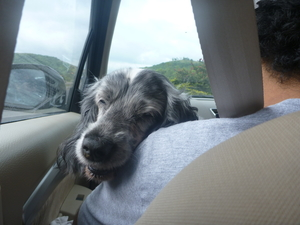Mia Goes to Malvan: A Weekend Getaway