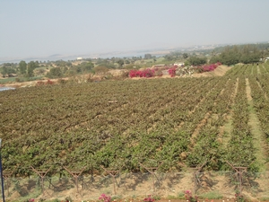 Day trip to Sula wine land