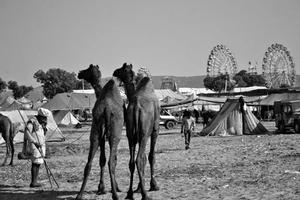 One Night In Pushkar