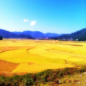 The Journey of My Life - Ziro