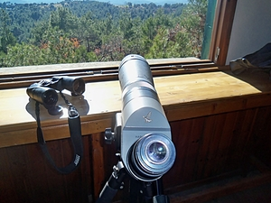 Do you love bird watching?
