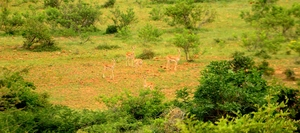 Jayamangali Blackbuck Reserve: Chasing nature's bounty on a day tour off Bangalore