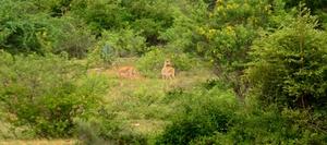 Jayamangali Blackbuck Reserve: Chasing nature's bounty on a day tour off Bangalore