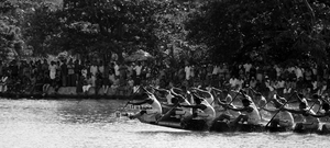 All aboard for a boat race at Alleppey, and a bird sanctuary at Kumarakom !