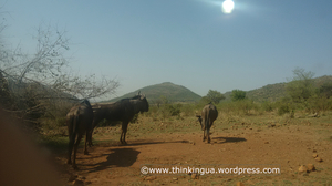 Pilanesberg National Reserve Visit (South Africa)