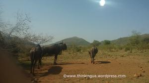 Pilanesberg National Reserve Visit (South Africa)