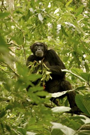 The Gorilla Loop - Kenya, Uganda & Rwanda