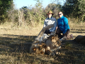 Walking with the lions in Zambia
