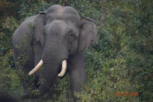 The Elephant Trail at Corbett National Park