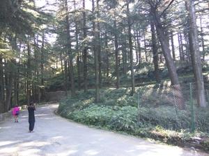 Weekend getaway to Chail, Himachal Pradesh