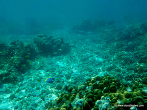 Scuba Diving – Lakshadweep!