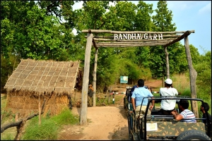 A Wild Encounter: Bandhavgarh