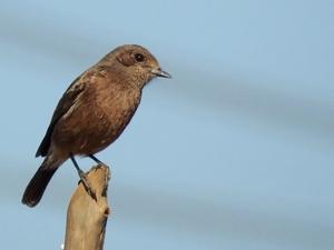 Hoskote lake, a small unsullied waterbody - a birder's paradise near Bangalore