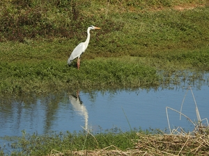 Hoskote lake, a small unsullied waterbody - a birder's paradise near Bangalore