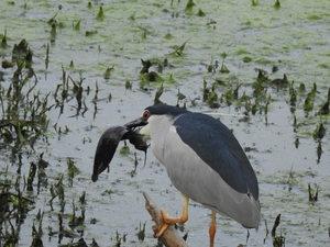 Bharatpur Bird Sanctuary - A World Heritage Site