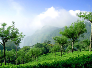 4 Stunning Hill Stations in the Nilgiris